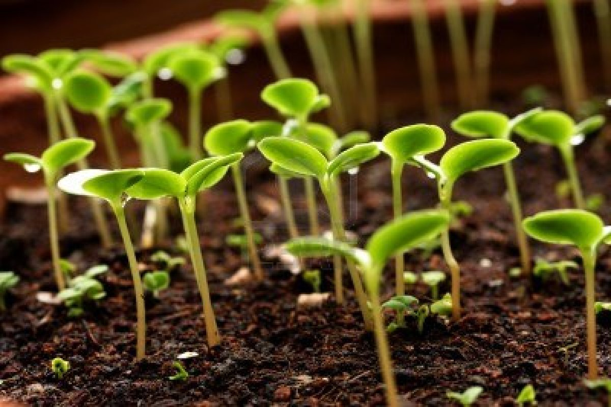 growing your own seedlings
