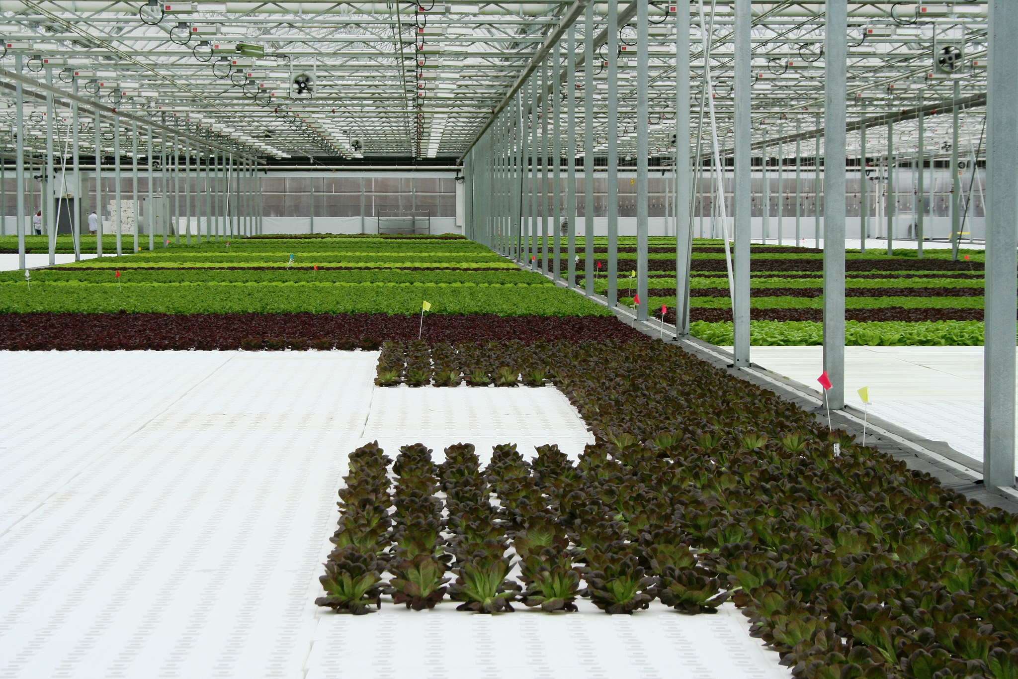 Green City Growers Tour