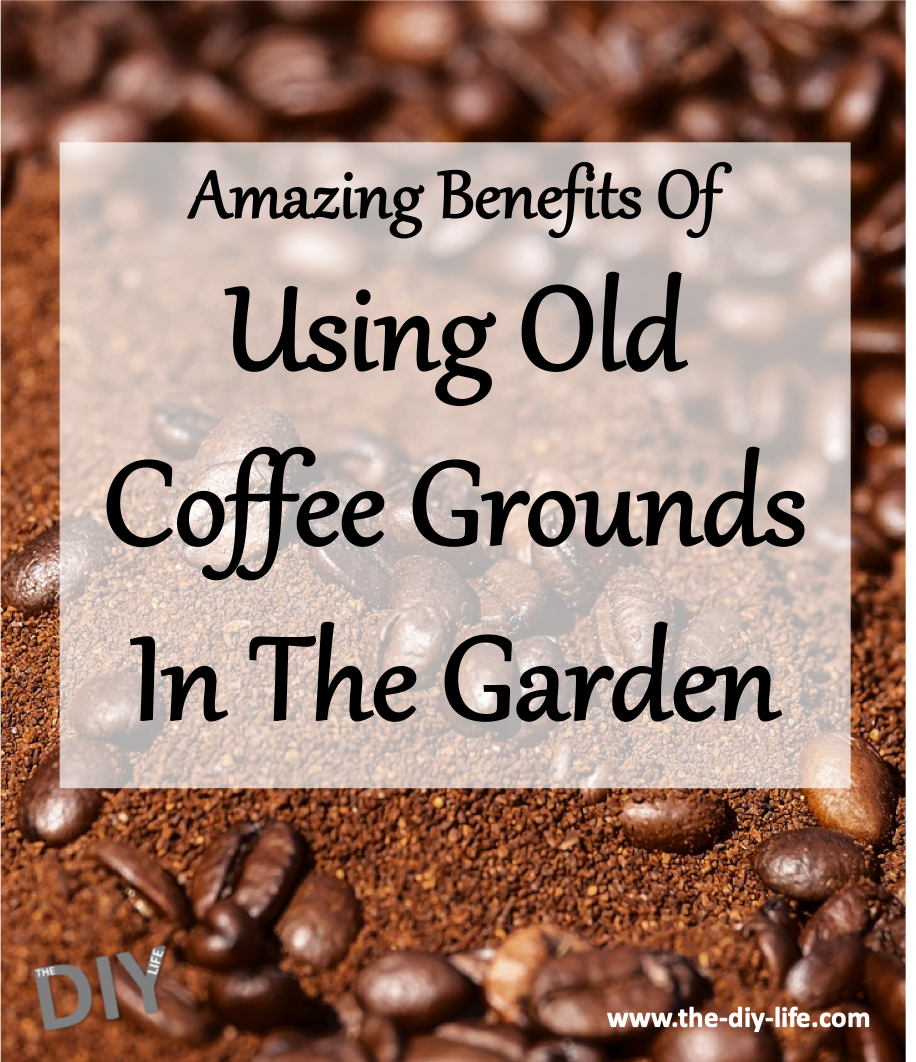 Amazing benefits Of Using Old Coffee Grounds In The Garden