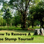 how to remove a treestump