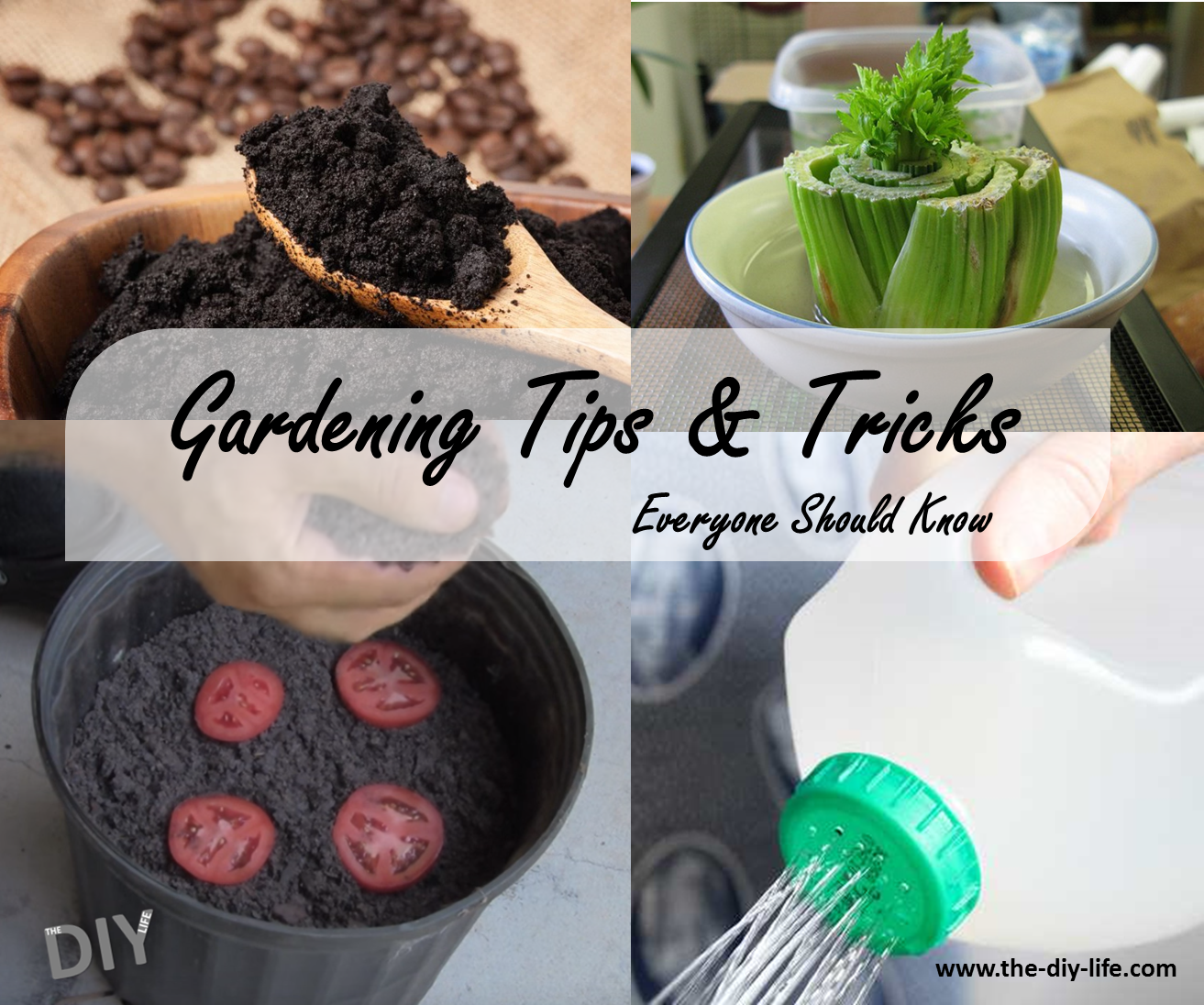 gardening-tips-and-tricks