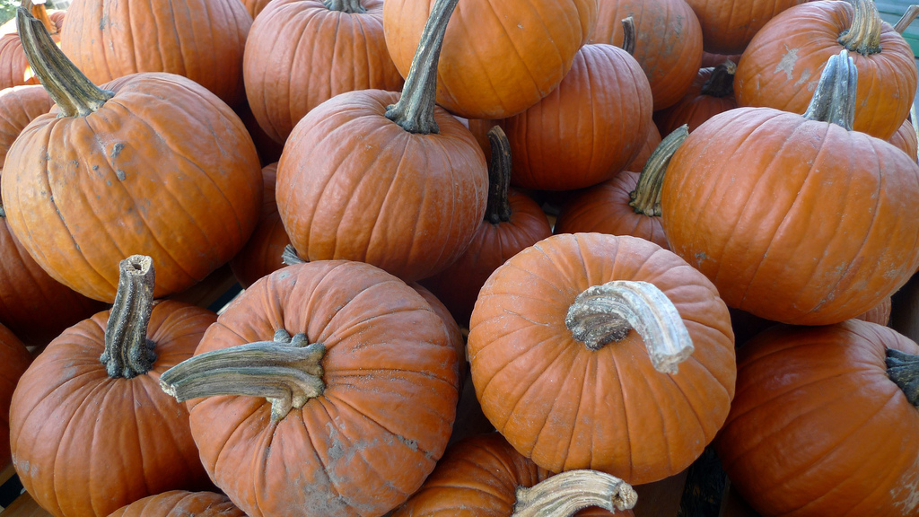 fresh pie pumpkins
