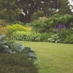 10 plants you need to avoid planting when gardening