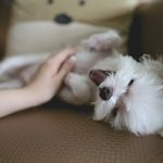 Dog & Cat Shedding – How To Keep Your Home Free From Pet Hair