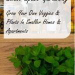 Small Space Gardening – All You Need To Know To Grow Your Own Veggies & Plants