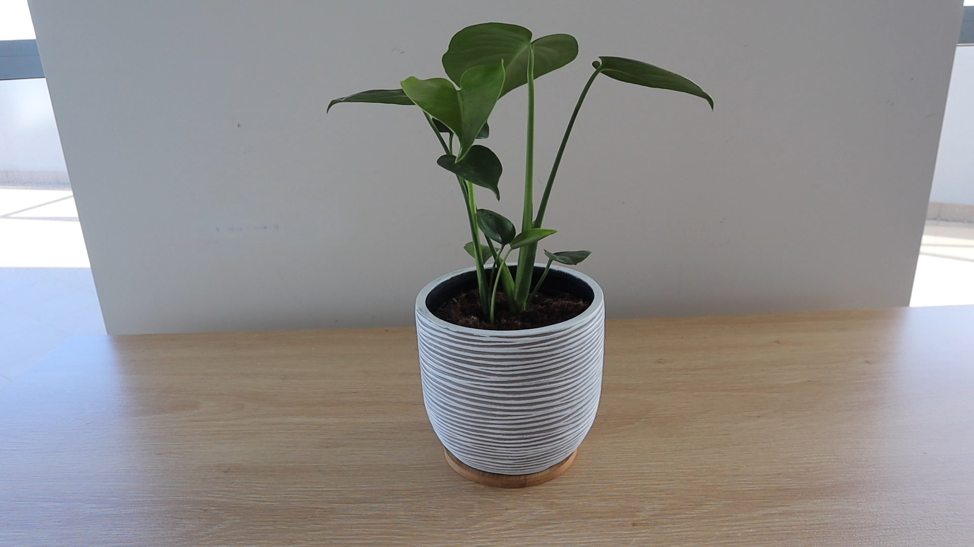 Base For Indoor Plant