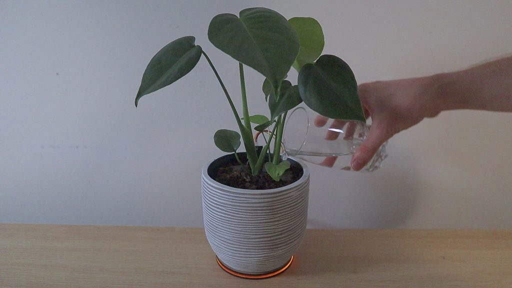 Watering Indoor Plant