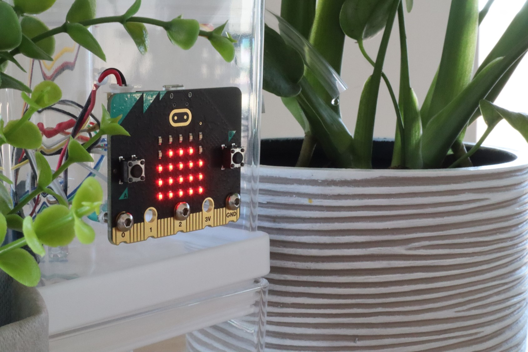 Microbit Looking After Plant